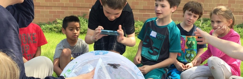 Burnside butterfly activity